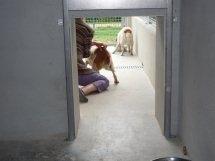 Quelle vie de chien pour cette bénévole